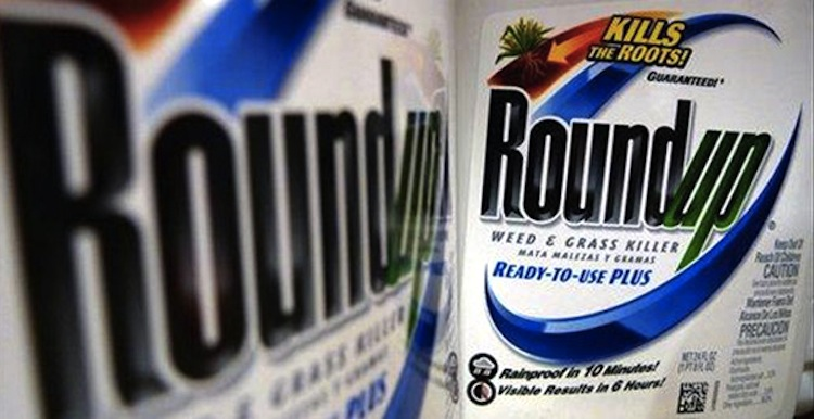 Monsanto – so what's all the fuss about?